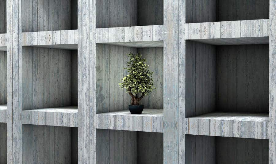 Get started with bonsai
