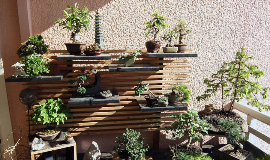 What Is the Best Bonsai Style for Beginners?